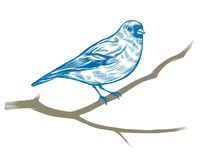 Hand drawn chaffinch royalty free illustration