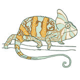 Hand drawn chameleon Stock Photos