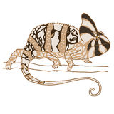 Hand drawn chameleon Royalty Free Stock Photography