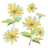 Hand-drawn chamomiles, daisies. Autumn flowers yellow feverfew.. Flowers on white background, All elements are editable. Vector watercolor stylization Stock Photos