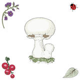 Hand drawn champignon mushroom Stock Photography