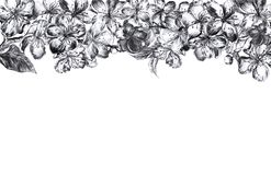 Hand drawn charcoal pencil edging gray and black flowers of the pulm blossoms and leaves, petals and buds in vintage royalty free stock photography