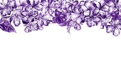 Hand drawn charcoal pencil edging violet flowers of the pulm blossoms and leaves, petals and buds in vintage style on a royalty free stock photo