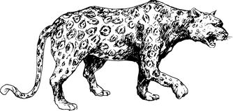 Hand drawn cheetah Stock Photography