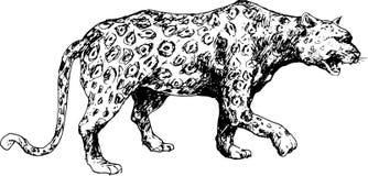 Hand drawn cheetah Stock Photography
