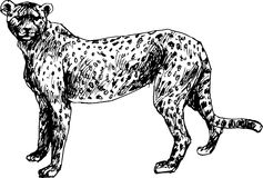 Hand drawn cheetah Stock Images