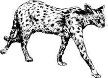 Hand drawn cheetah Royalty Free Stock Photo