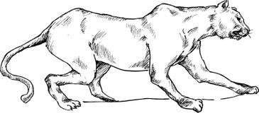 Hand drawn cheetah Royalty Free Stock Images