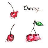 Hand drawn cherries Royalty Free Stock Photo