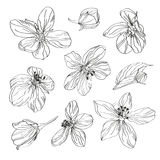 Hand drawn cherry blossom flowers set Stock Images