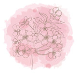 Hand drawn cherry blossom on watercolor stain.  Vector illustration Stock Image
