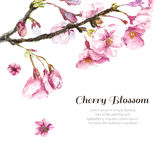 Hand Drawn Cherry Blossoms. Royalty Free Stock Image