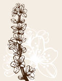 Hand drawn cherry branch Royalty Free Stock Images
