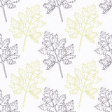Hand drawn chervil branch wirh flowers stylized Stock Images