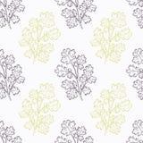 Hand drawn cilantro branch stylized  Stock Photo