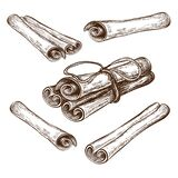 Hand drawn cinnamon sticks and rolls illustration. cannella sketch collection isolated on white. engraved flavor spice