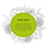 Hand drawn circle design template with citrus fruit isolated on white background. Vector illustration Vector Illustration Royalty Free Stock Photo