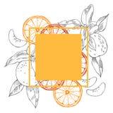 Hand drawn citrus fruits. Vector frame vector illustration
