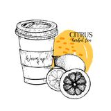 Hand drawn citrus herbal tea to go. Tea cup, lemon and orange. Vectror engraved art. Healing warm tea in paper cup. Food. Ingredient, aromatherapy, cooking. For Stock Photos