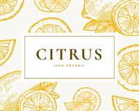 Hand Drawn Citrus Illustration Card. Abstract Vector Lemon and Orange Sketch Background with Classy Retro Typography. Isolated Royalty Free Stock Image