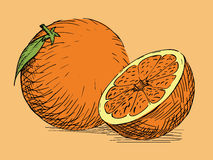Hand drawn citrus orange Royalty Free Stock Image
