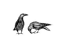 Hand drawn city birds. Vector illustration of hand drawn city birds. A couple of ravens hand drawn with chalk. Beautiful design elements Stock Image