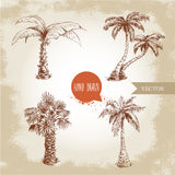 Hand drawn coco palm trees sketch set. Royalty Free Stock Photos