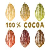 Hand drawn cocoa beans set Royalty Free Stock Photo