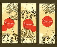Hand drawn coconut design banner template. Retro sketch style vector tropical food illustration. Royalty Free Stock Image