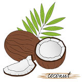 Hand drawn coconuts with leaves on white background. Royalty Free Stock Image