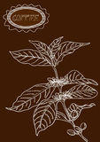 Hand drawn coffee plant illustration Stock Photo
