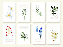 Hand drawn collection of romantic floral Royalty Free Stock Photos