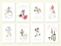 Hand drawn collection of romantic floral Royalty Free Stock Image