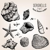 Hand drawn collection of various seashell Royalty Free Stock Photo