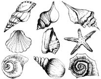 Hand drawn collection of various seashell illustrations. On white background Royalty Free Stock Photo