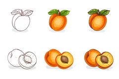 Hand drawn color and sketch, tasty apricot Royalty Free Stock Photo