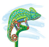 Hand drawn colored doodle outline chameleon illustration.  Royalty Free Stock Images