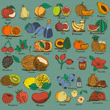 Hand drawn colored fruits royalty free illustration