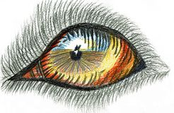 Dog`s Eye - Colored Pencil Drawing Stock Photo