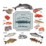 Hand Drawn Colored Seafood Collection Royalty Free Stock Images