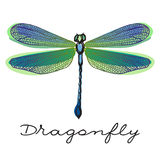 Hand drawn colorful  dragonfly Stock Photo