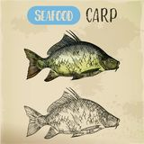 Sketch of common carp. River fish Stock Photography