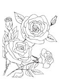 Hand drawn composition of roses, buds and leafs Stock Image