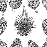Hand drawn conifer trees cones sketch. Stock Photography