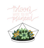 Hand drawn contained succulents. Scandinavian style vector illustration, home decor. Royalty Free Stock Photo