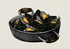 Hand drawn cooked mussels illustration Royalty Free Stock Photos