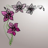 Hand Drawn Corner Design With Orchid Royalty Free Stock Image