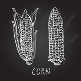 Hand drawn corns Royalty Free Stock Photos