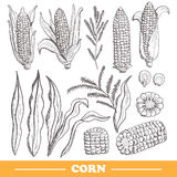Hand drawn corns set Stock Images