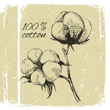 Hand drawn cotton brunch Royalty Free Stock Images